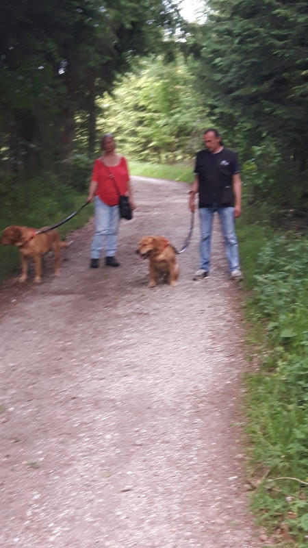 Spaziergang im Wald 10.6.2019