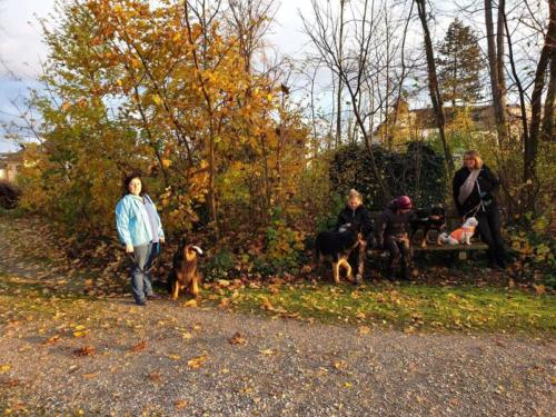 Spaziergang in Neydharting 9.11.2019
